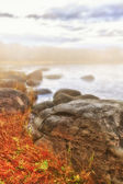 Fog coast landscape — Stock Photo