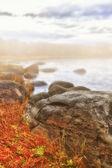 Fog coast landscape — Stock Photo
