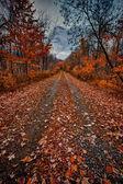 October autumn scene — Stock Photo