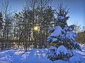 雪の後の冬景色 — ストック写真