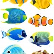 Set of tropical fish — Stock Vector