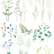 Grass and wild flowers. — Stock Vector #9963605