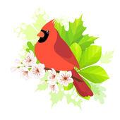 Spring cardinal — Stock Vector