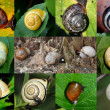 Stock Photo: Escargots