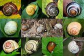 Escargots — Stock Photo