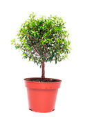 Small tree — Stock Photo