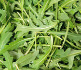Green arugula, — Stock Photo