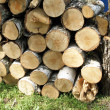 Stock Photo: Pile of wooden logs