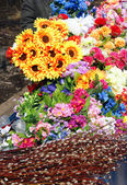 Different color Flowers — Stock Photo