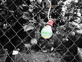 Bulb on a fence — Stock fotografie