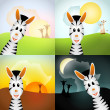 Four zebras in various daytime — Stock Photo