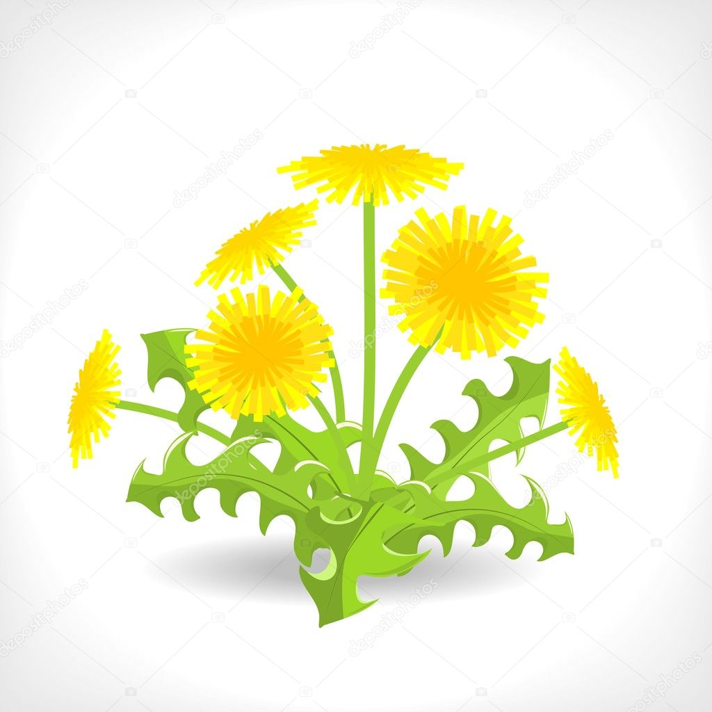 Illustration of dandelion on white background  Stock Vector #10497791