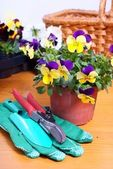 Gardening tools with flowers — Stock Photo