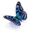 Butterfly. Isolated on white background. — Stock Photo