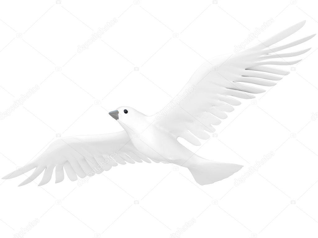 A free flying white dove isolated on white background. — Stock Photo #10011566