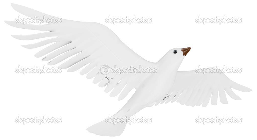 A free flying white dove isolated on white background. — Stock Photo #10011567