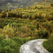 Country lane, Italy — Stock Photo