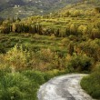 Stock Photo: Country lane, Italy
