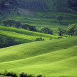 Sunny Italian fields — Stock Photo
