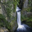 Stock Photo: Toketee Falls, Oregon