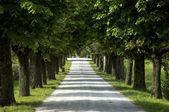 木が並ぶ道路、イタリア — ストック写真