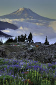 Wildflowers, tents, Mt. Adams — Stock Photo