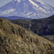Mt Adams in Washington state — Stock Photo