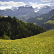 Stock Photo: Spring pastures in Dolomite Mountains of northern Italy