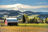 Red barn, apple orchards, Mt. Hood — Stock Photo