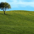 Stock Photo: Beautiful summer landscape with single tree