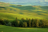 Italian fields — Stock Photo