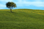 Beautiful summer landscape with single tree — Stock Photo