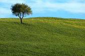 Beautiful summer landscape with single tree — Stock Photo