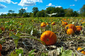 Pumpkins in Field with Vivid Clouds — Stock Photo