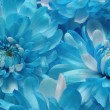 Royalty-Free Stock Photo: Blooming Blues