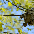 Nest with Vivid Tree Canopy — Stock Photo