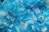 Blooming Blues — Stock Photo