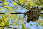 Nest with Vivid Tree Canopy — Stock Photo