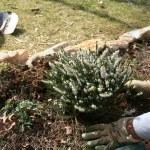Planting A Garden — Stock Photo #10003926