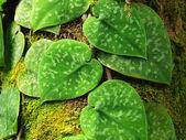 Folhas de árvores cobertas de musgo — Foto Stock