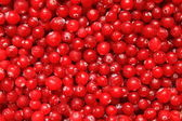 Cranberry — Stock Photo
