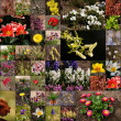 Flower collage — Stock Photo #9904079