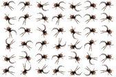 Diadem spiders — Stock Photo