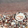 Two wedding rings in shell - Stock Photo