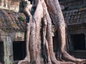 Roots and temples — Stock Photo