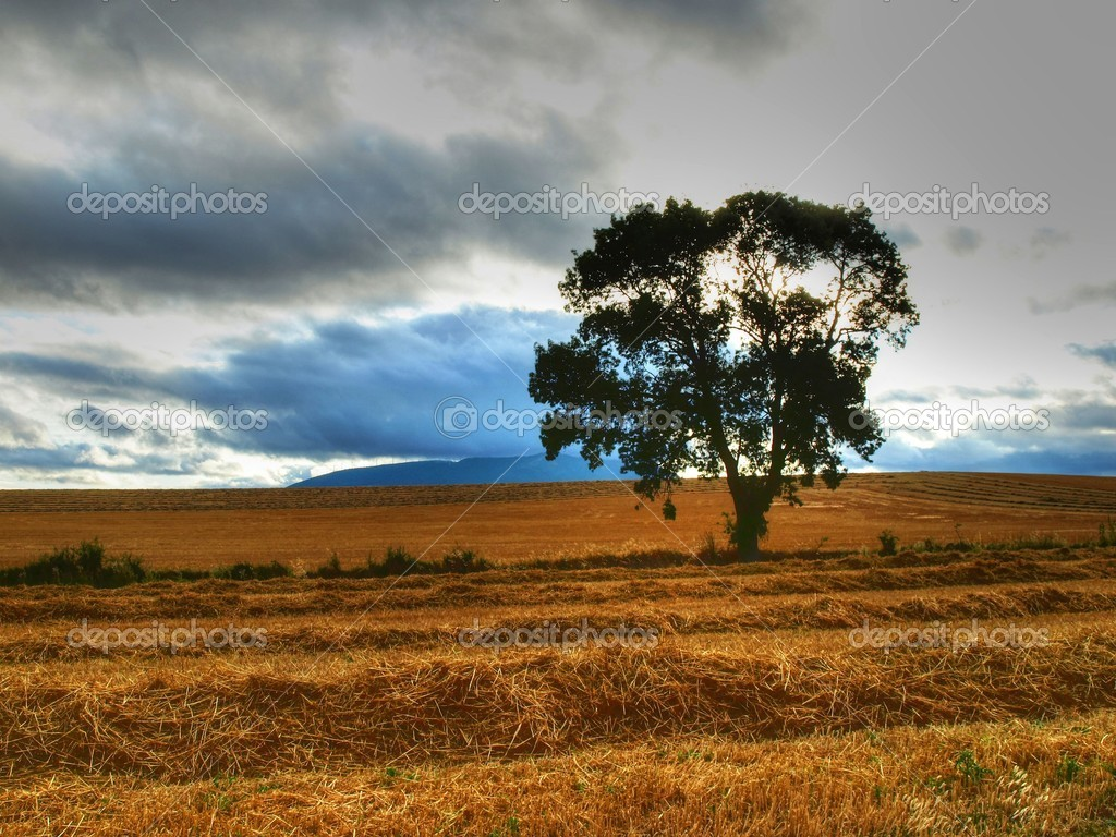 Lone tree in a field in the afternoon. — Stock Photo #10189063