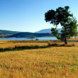 Tree and Lake — Stock Photo #10458147