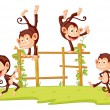 Monkeys - 