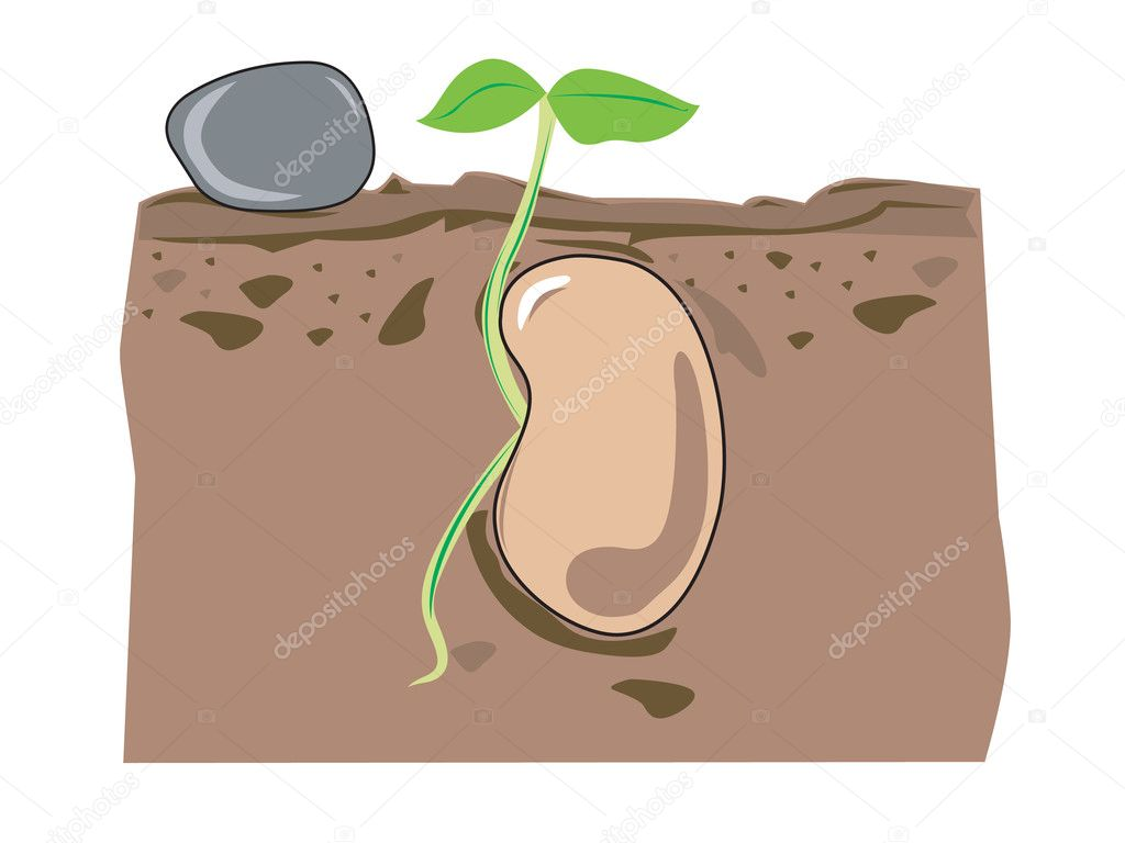 Illustration of a spouting seed — Stock Vector #10032266