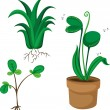 Plants — Stock Vector